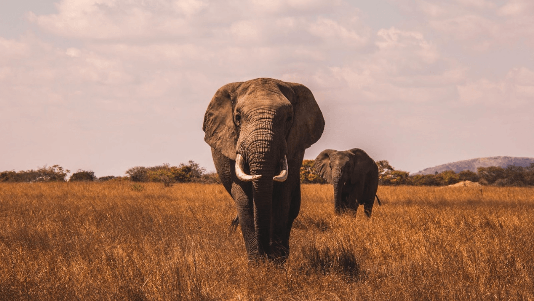 A Guide to Locating the Big Five in Africa | Hey, Miss Adventures!