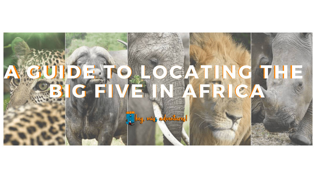 A Guide to Locating the Big Five in Africa