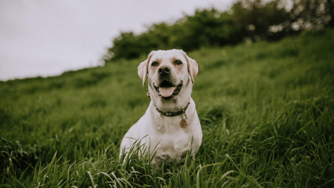 3 Ways Fish-Based Dog Food Help Your Dog Live a Healthier Life | Hey, Miss Adventures!