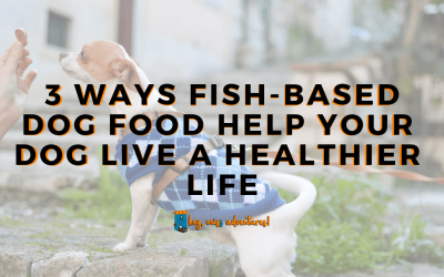 3 Ways Fish-Based Dog Food Help Your Dog Live a Healthier Life